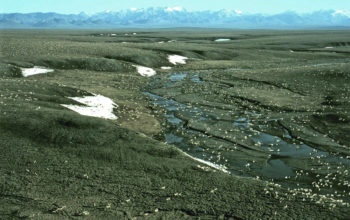 U.S. House Passes Legislation to Protect ANWR